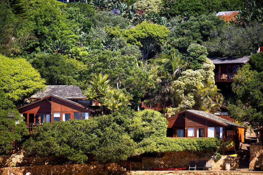 Under Milkwood: the chalets nestled amongst the milkwood trees